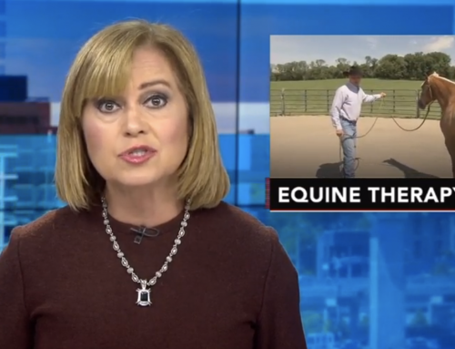 Equine Assisted Therapy at NJ Farm Helping Recovering Addicts